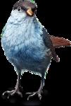 ldavi-fallingleavesautumntea-elderberrybird2.png