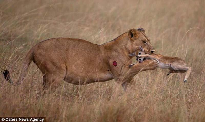 Мультипликацыонные секси львы и львицы