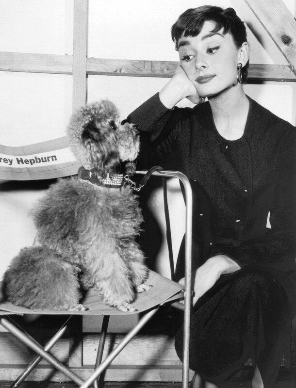 Hepburn And Poodle
