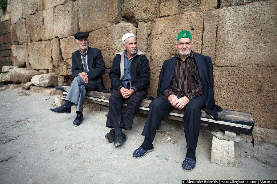 Дагестан купил израильских шмелей и завалит страну помидорами