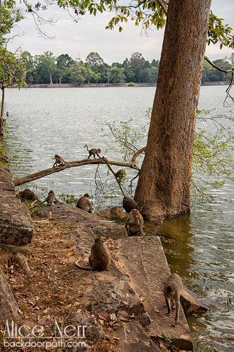 перед въездом в Ангкор очень много обезьян