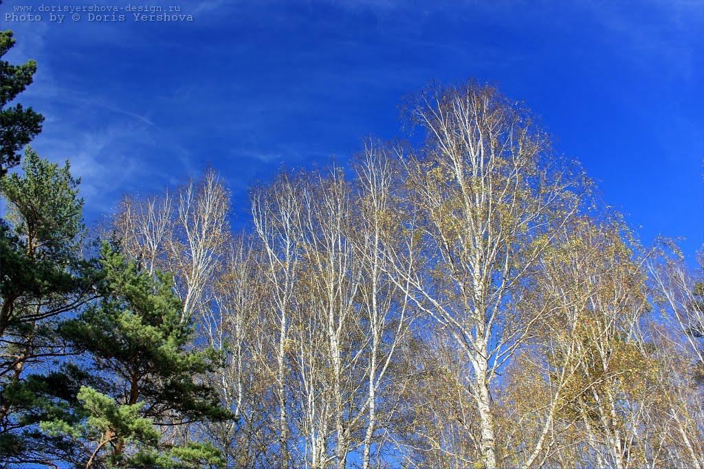 Осень в Зеньковском парке. Фото - Дорис Ершова