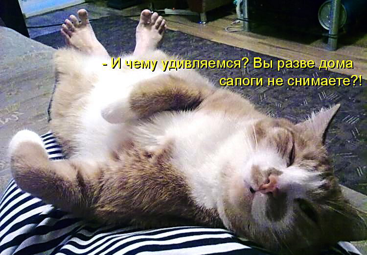 Смешные картинки с котами с надписями до слез, няня