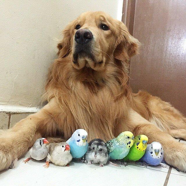 Собака, 8 птичек и хомяк