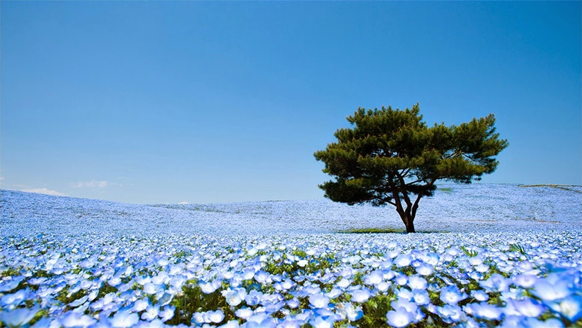 Живописный японский парк Хитати Кайхин 0 1422e7 9f2c5f93 orig