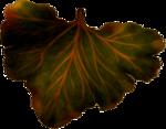dus-intothedarkness-leaf3.png