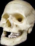 NLD Skull.png