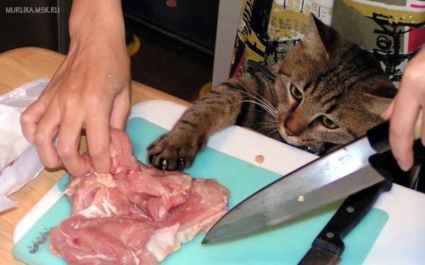 Кормить кота мясом