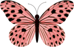 jss_bluejeans_butterfly pink 3.png