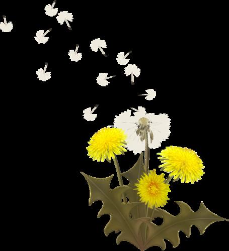 «Summer Breeze» 0_95ae3_7cbf9174_L
