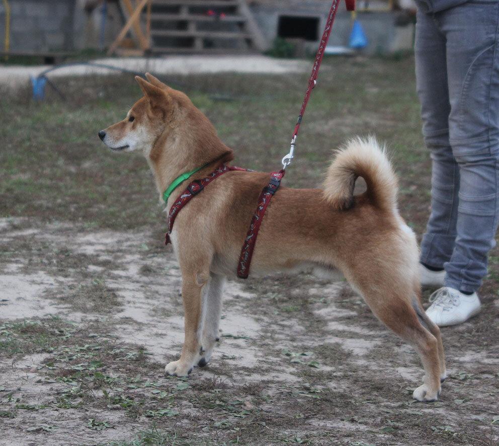 Недельные курсы повышения квалификации для собакообожак :-) Приглашаем всех!!! - Страница 3 0_7d754_ce20ae71_XXL
