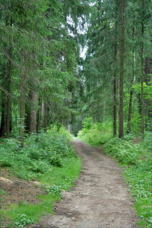 Павловский парк. Дорога в лесной части
