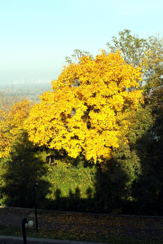 Желтая крона