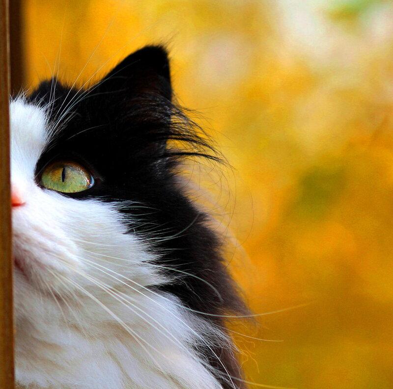 Котов по осени считают.