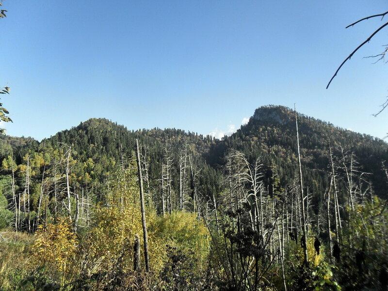 Лесной тропой в горы...