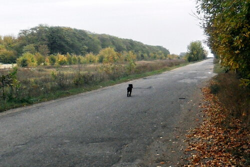На дороге осенней