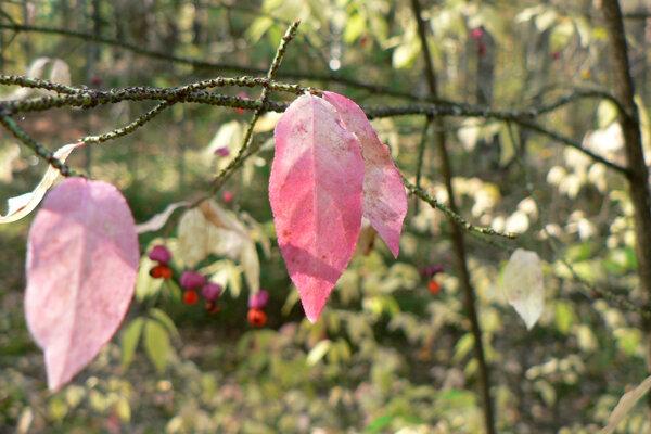 почему я люблю осень листья