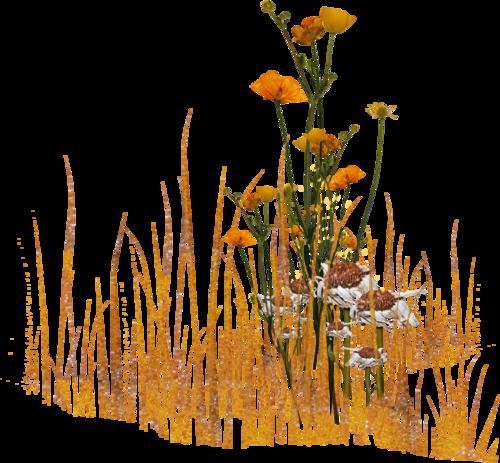 """Tubes Déco : Les fleurs - thème """"fleurs des champs"""""""