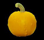 natali_halloween_pumpkin7.png