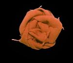 natali_halloween_flower1b-sh.png