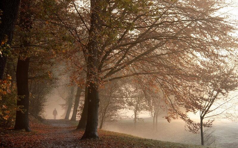туманная осень 6