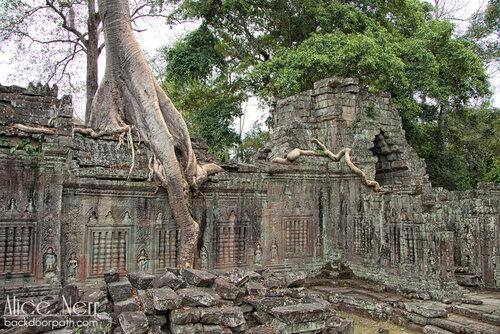 храм с деревьями, Ангкор
