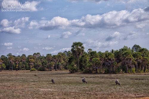 где-то по дороге по большому кругу, Ангкор