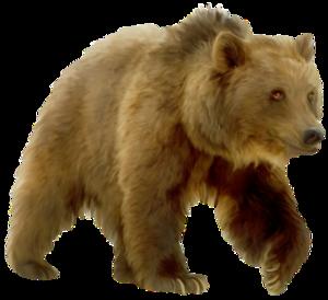 Медведь на прозрачном фоне картинки для детей 7