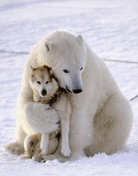 Международный день полярного медведя. Друзья