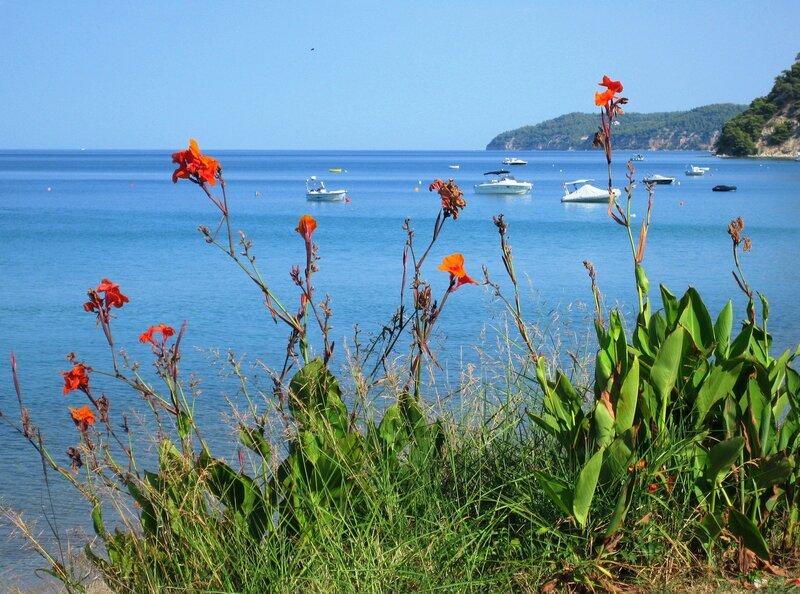 Пейзаж с цветущими каннами