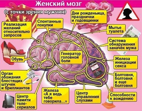 Да, природа обделила женщин - их мозг в среднем на 150 граммов легче мужского. .У дам очень мало нейронов в...