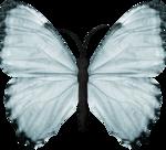 jss_bluejeans_butterfly blue 1.png