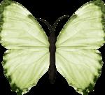 jss_bluejeans_butterfly green 3.png