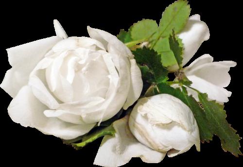 «sweet romance» 0_955af_1c0b9d8b_L