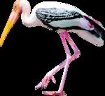 RD_SummerBreeze_bird2.png