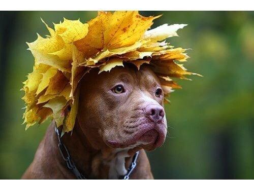 осень собаки передразнивают лягушек