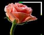 Annytubes_floral_231_29_09_2012.png