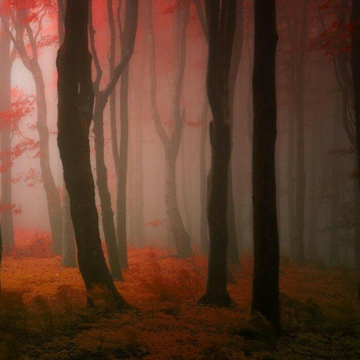Туман в рыжем лесу