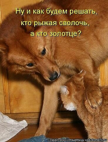 http://img-fotki.yandex.ru/get/6522/59709858.1d/0_ef6ea_55758008_XL.jpg