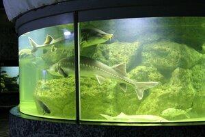 Жители и гости столицы Приморья смогут увидеть «Ужасы морского дна»