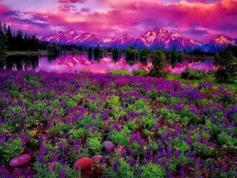 Пурпурная дымка фото 16 фотография