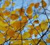 Осень в Екатерининском парке