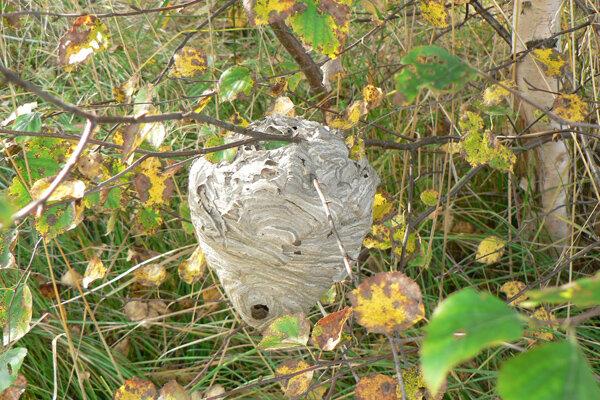 почему я люблю осень гнездо