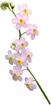 priss_spring_el51.png