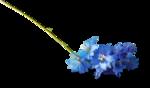 ldavi-shadowedflowers-delphinium18.png
