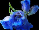 ldavi-shadowedflowers-delphinium23.png