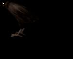 NLD Halloween Freebie Crow sh.png