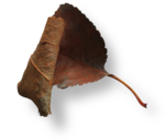 natali_halloween_leaf5-sh1.png