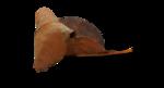 natali_halloween_leaf7-sh2.png