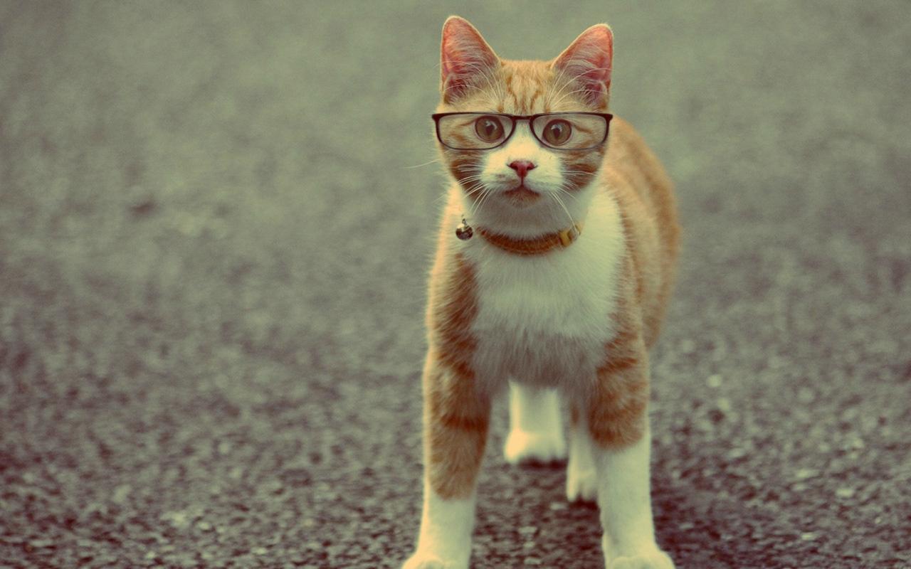 Кошки снижают детскую успеваемость